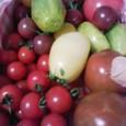 色んなトマト